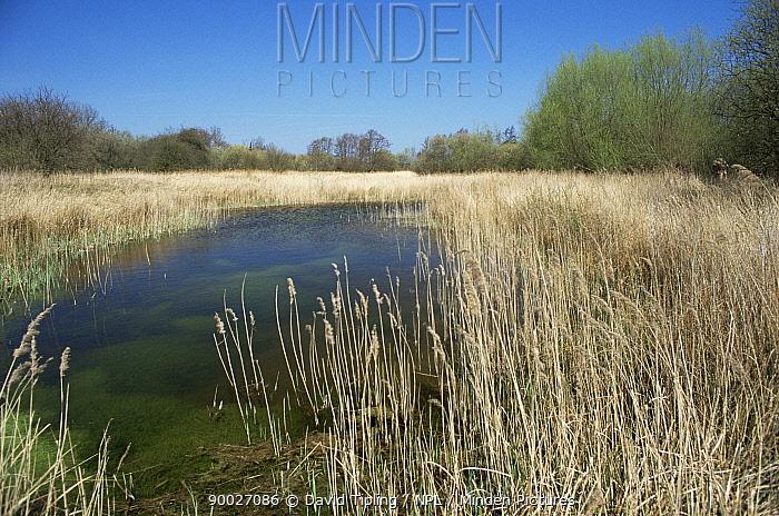 Stodmarsh NNR, Kent, UK  -  David Tipling/ npl