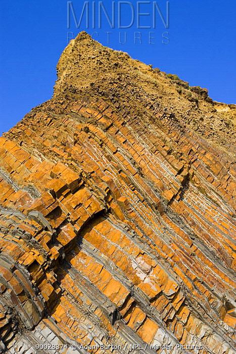 Layered rocks in the cliffs at Sandymouth, North Cornwall, UK  -  Adam Burton/ npl