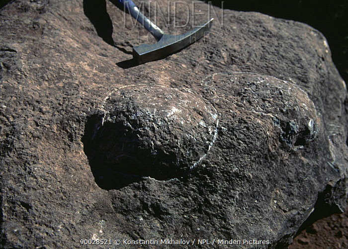 Fossil Dinosaur eggs (Sauropoda) from Upper Cretaceous period of Spain, Catalonia, pre-Pyrenees  -  Konstantin Mikhailov/ npl