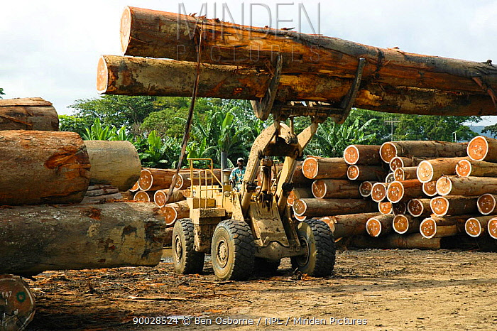 Tropical hardwood timber ready to be loaded onto railway wagons for transporting to the coast (for shipping or processing), Nr Lope forest, Gabon, 2004  -  Ben Osborne/ npl