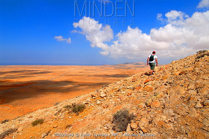 Man hiking up the Sacred Mountain of Tindiya, Fuerteventura, Canary Isles, Spain, September 2007  -  Fabio Liverani/ npl