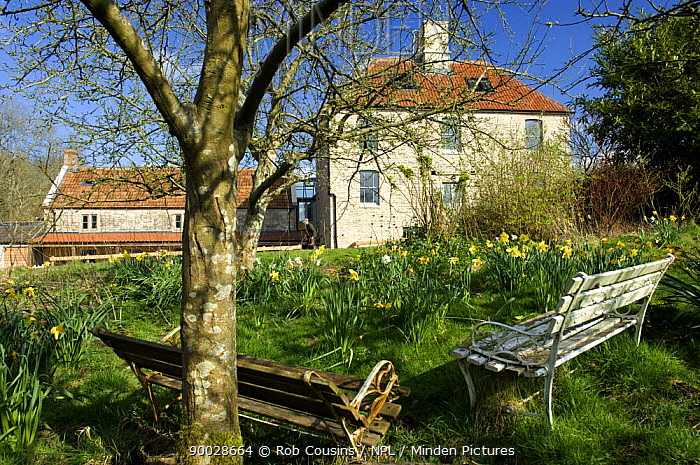 Spring flowers in garden at the Avon Wildlife Trust Folly Farm Centre, Somerset, UK  -  Rob Cousins/ npl