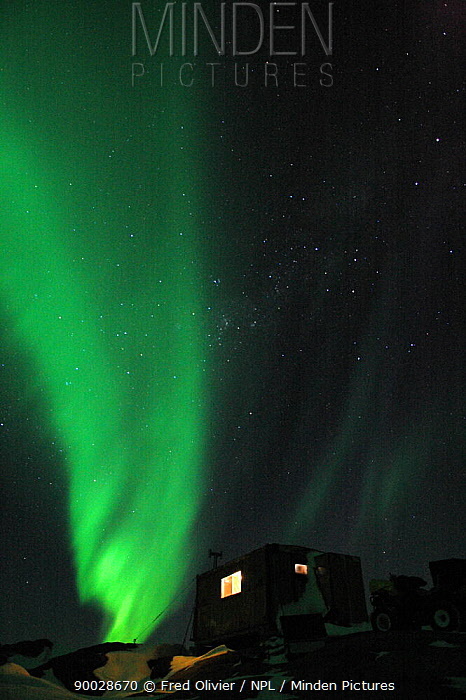 Southern lights, Aurora australis, in the night sky, Antarctica NOT FOR REPRODUCTION GREATER THAN A4 SIZE  -  Fred Olivier/ npl