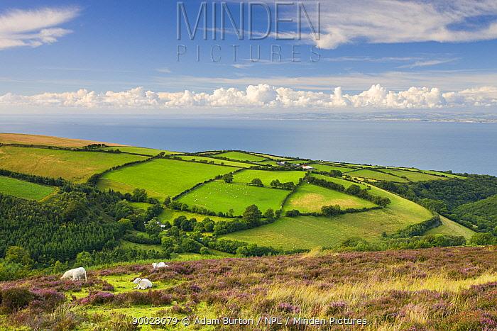 Exmoor countryside and coast in summertime, Exmoor National Park, Somerset, England  -  Adam Burton/ npl