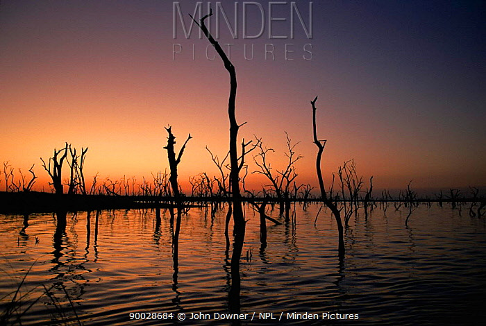 Lake Kariba at sunset Zimbabwe, Habitat for African Fish Eagle  -  John Downer/ npl