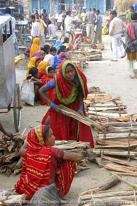 Women selling timber in villages of Lahan and Koshi-Tapa, March 2006, Bengalia, SE Nepal  -  Konstantin Mikhailov/ npl