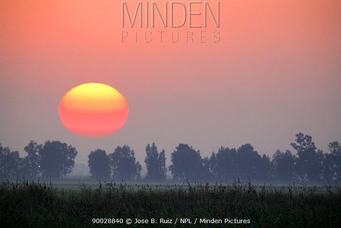 Sun rising at dawn over the marsh, Donana NP, Spain  -  Jose B. Ruiz/ npl