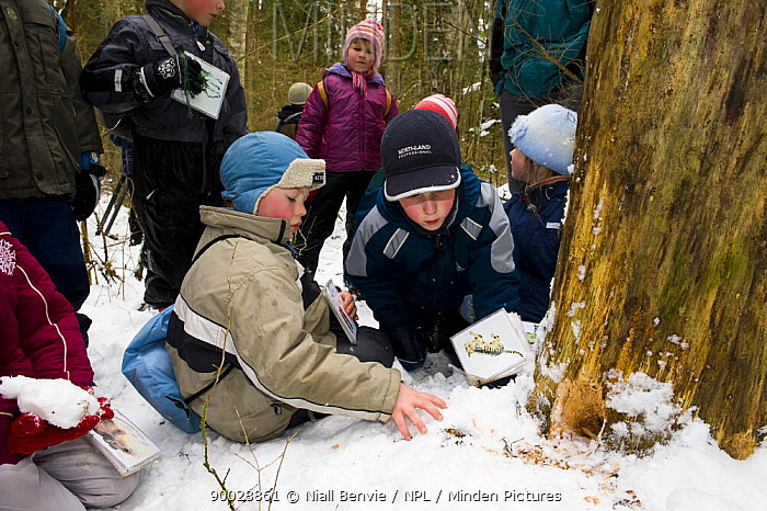 A group of Estonian school children in the woods learning about nature, Tartumaa, Estonia  -  Niall Benvie/ npl