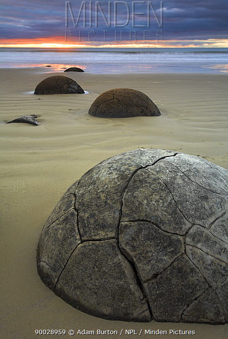 Sunrise over the Moeraki boulders, Otago Coast, South Island, New Zealand  -  Adam Burton/ npl