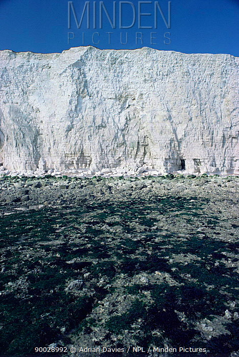 Chalk cliffs showing wave cut platform Sussex, UK  -  Adrian Davies/ npl