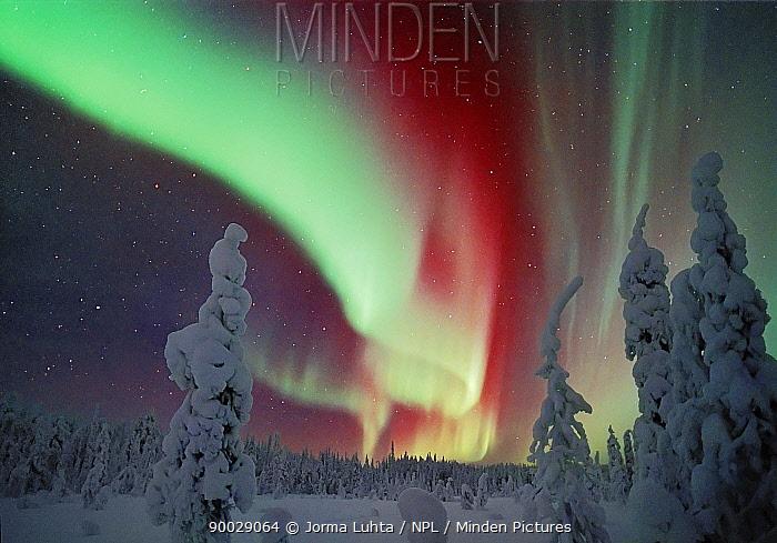 Northern lights, Aurora borealis, Lapland, Finland  -  Jorma Luhta/ npl