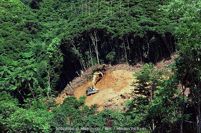Rainforest clearance for road building, Okinawa, Southern Japan Note, habitat of Pryors woodpecker 2001  -  Mike Potts/ npl