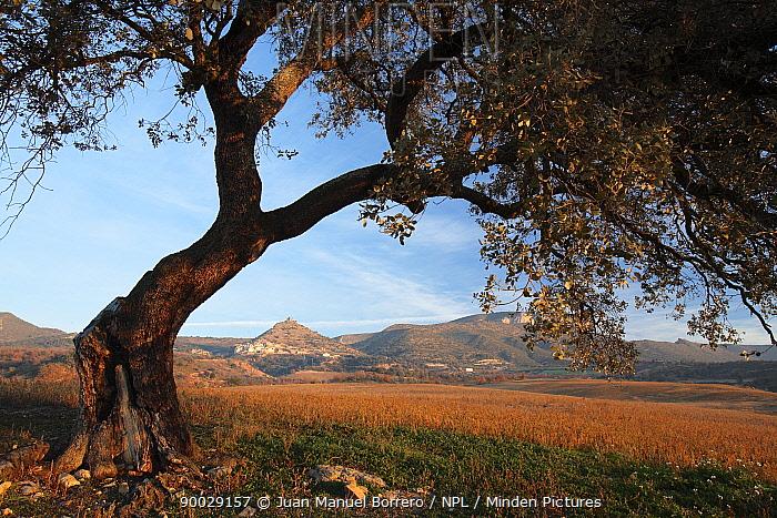 Conca de Tremp landscape viewed from beneath a tree in the Pyrenees mountains, L?rida, Spain  -  Juan Manuel Borrero/ npl