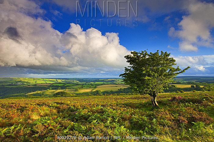 Views from Dunkery Hill, Exmoor National Park, Somerset, England  -  Adam Burton/ npl