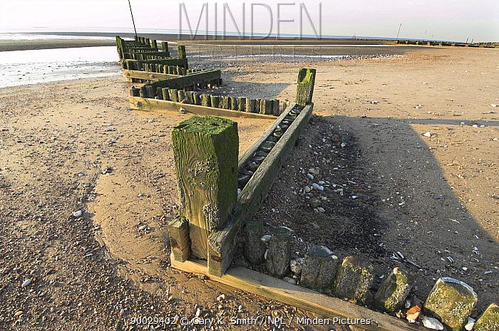 Wooden groyne, method of coastal defense against sea erosion, at low tide, Norfolk, Uk  -  Gary K. Smith/ npl