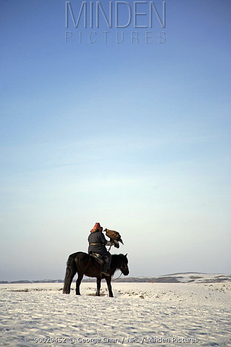 A Kazakh hunter with his Golden eagle, out hunting in the Altai mountains of Xinjiang Province, north-west China February 2007  -  George Chan/ npl