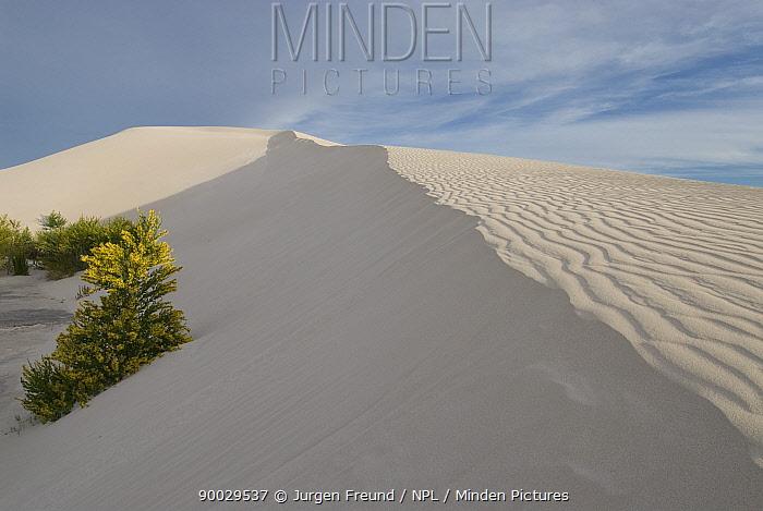 The white sand dunes of Green Head, Western Australia  -  Jurgen Freund/ npl