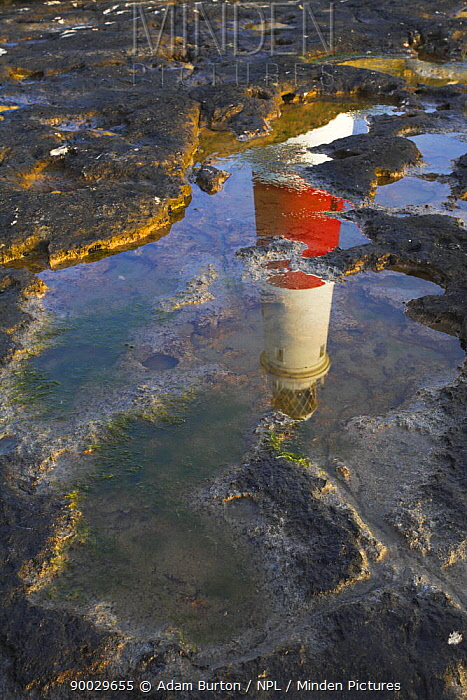 Portland Bill lighthouse reflected in a rock pool, Jurassic Coast World Heritage Site, Dorset  -  Adam Burton/ npl