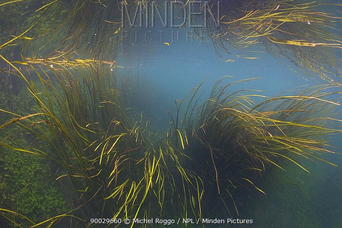 Underwater landscape in chalk stream, Croatia, October  -  Michel Roggo/ npl