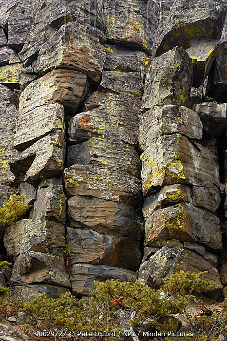 Sheepeater Cliff basalt columns Yellowstone National Park, Wyoming, USA  -  Pete Oxford/ npl