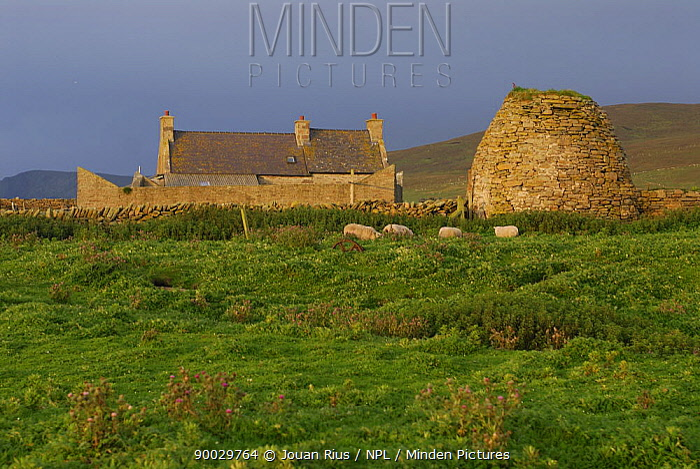 Gungstie farm on Noss Island, Shetland Islands, Scotland, UK  -  Jouan & Rius/ npl