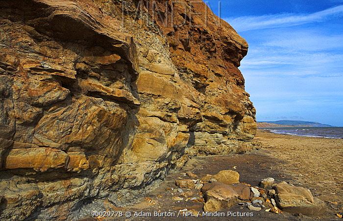Sedimentary cliffs on the south of the Isle of Wight, Hampshire, England  -  Adam Burton/ npl