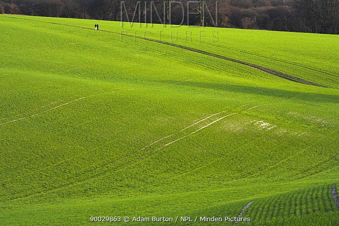 Couple walking on footpath across arable field on South Downs, Hampshire, England  -  Adam Burton/ npl