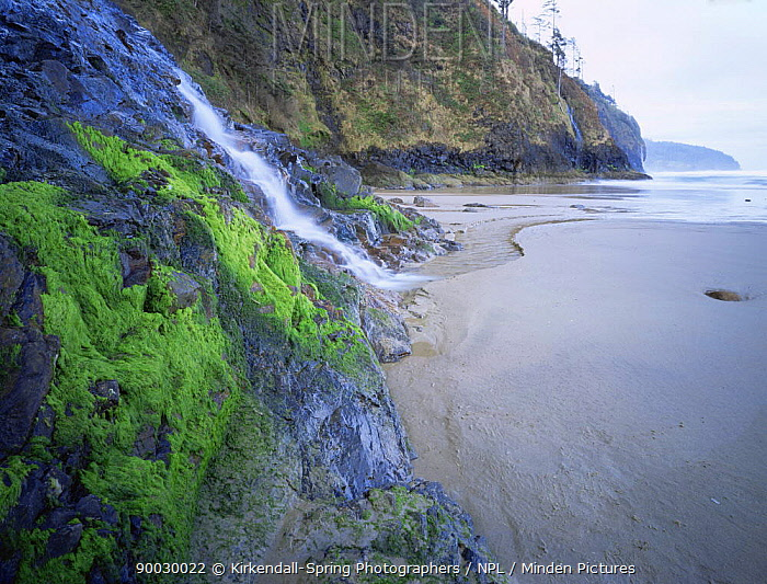 Waterfall down cliff onto beach, Cape Lookout State Park, Oregon, USA  -  Kirkendall-spring/ npl