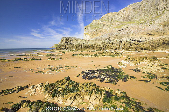 Mewslade Bay at low tide exposing rock formations, The Gower Peninsula West Glamorgan, Wales, UK  -  Peter Lewis/ npl