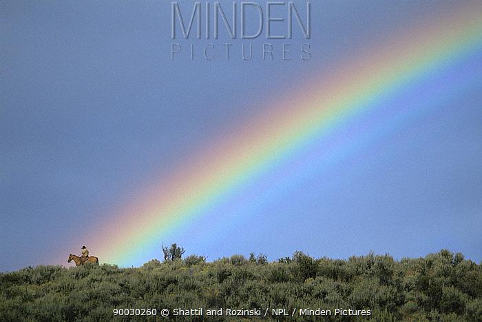 Cowboy riding along Sagebush ridge with rainbow behind, Colorado, USA  -  Shattil & Rozinski/ npl