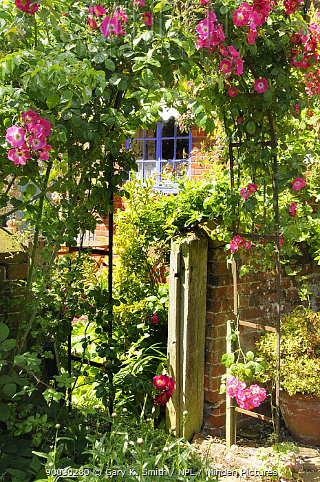 Traditional Rose Arch (Rosa sp) in a country garden in summer, England, UK, July  -  Gary K. Smith/ npl