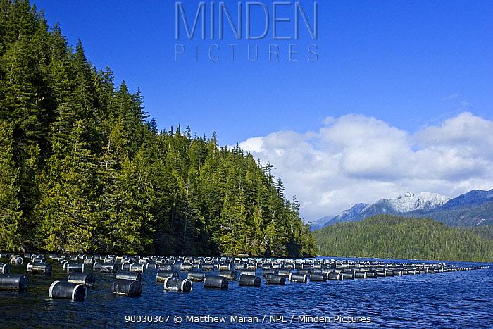 Oyster Farm in Clayoquot Sound, Vanouver Island, BC, Canada  -  Matthew Maran/ npl