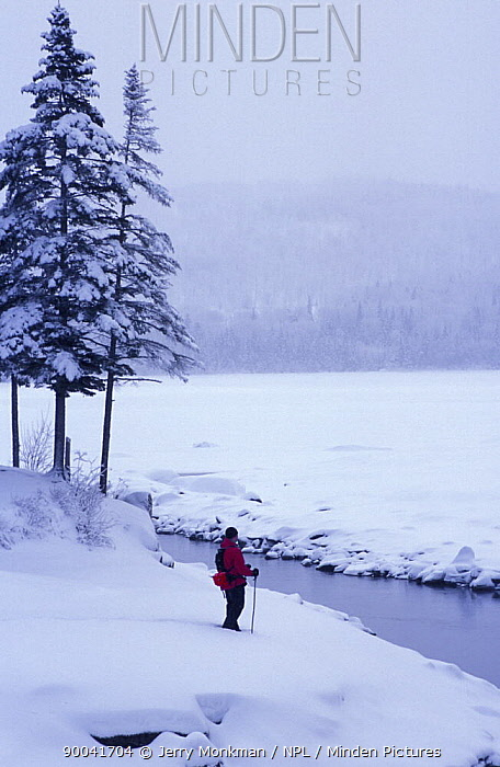 Snowshoeing along the shores of Second Connecticut Lake, Pittsburg, New Hampshire, USA  -  Jerry Monkman/ npl