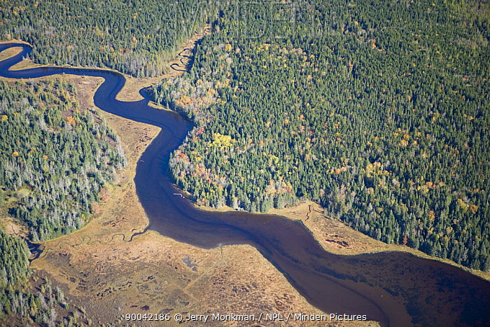 Aerial view of a tidal creek flowing through the Bass Harbor Marsh, Acadia NP, Maine, USA  -  Jerry Monkman/ npl