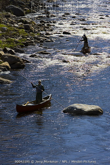 Poling canoes on the Ashuelot River, a tributary of the Connecticut River, Surry, New Hampshire, USA  -  Jerry Monkman/ npl