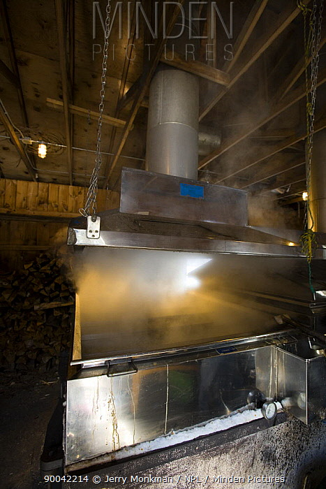 A sap evaporator in a sugar house in Barrington, New Hampshire, USA The Sugar Shack, manufacture of maple syrup  -  Jerry Monkman/ npl