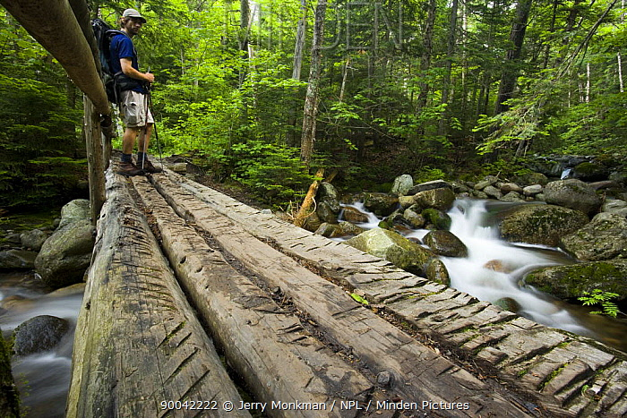 A hiker on a bridge over Gorge Brook, White Mountains, New Hampshire, USA, model released  -  Jerry Monkman/ npl