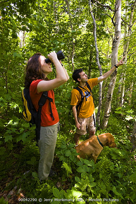 Birdwatching in the Green Mountains, Eden, Vermont, USA  -  Jerry Monkman/ npl