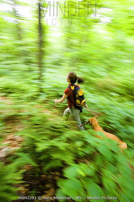 Hiking on the Long Trail, Green Mountains, Eden, Vermont, USA  -  Jerry Monkman/ npl