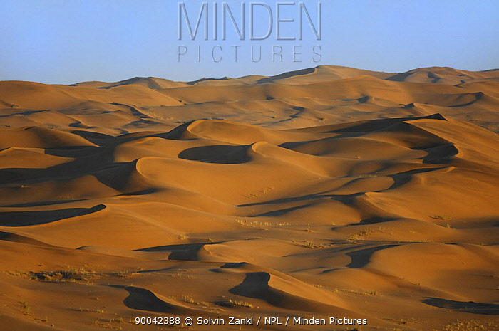 Sand dunes close to the Gobabeb Training and Research Centre, Namib Desert, Namibia 2007  -  Solvin Zankl/ npl