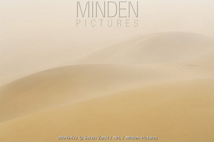 Fog over the sand dunes of the Namib desert, Namibia, an important source of water for the desert animals  -  Solvin Zankl/ npl