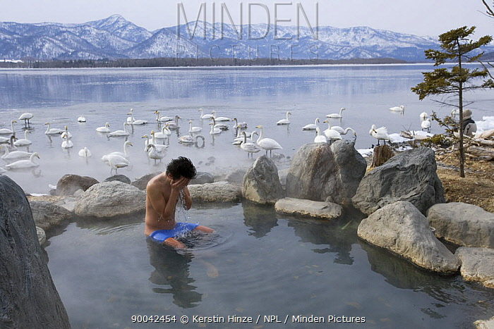 Japanese man taking a bath in an onsen, hot spring, flock of Whooper swans (Cygnus cygnus) on Lake Kussharo in background, Hokkaido, Japan February 2007  -  Kerstin Hinze/ npl