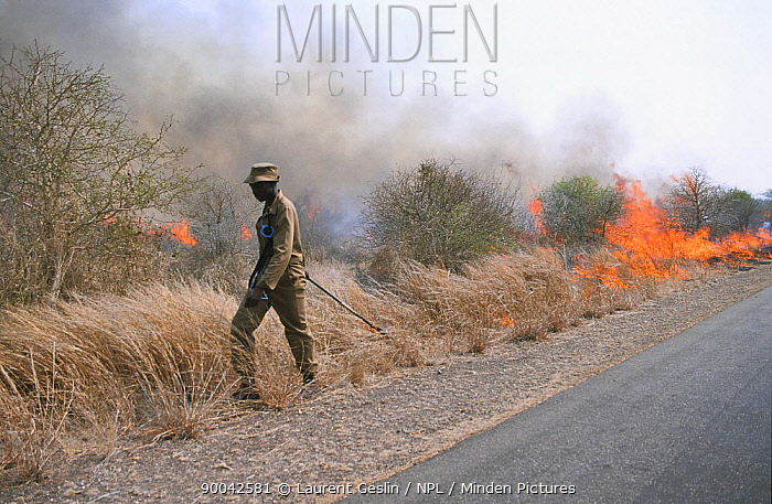 Controlled bush fire set by rangers in Kruger NP, South Africa, 2003  -  Laurent Geslin/ npl
