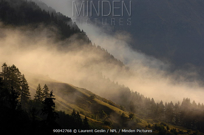 Landscape in mist, Swiss National Park, Alps, Swizerland  -  Laurent Geslin/ npl