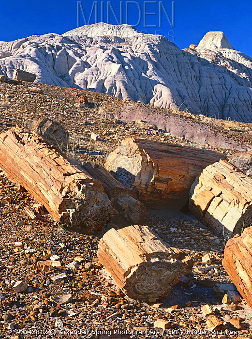 Petrified wood near Chinde Point in Petrified Forest National Park, Arizona, USA  -  Kirkendall-spring/ npl