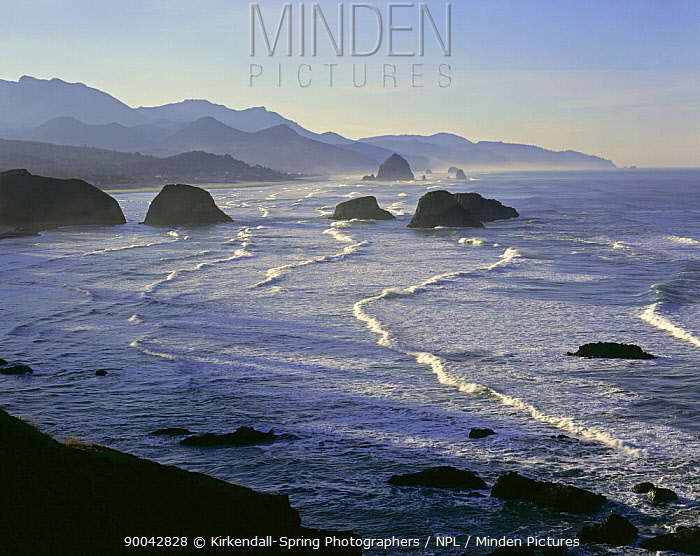 View of Cannon Beach from Ecola State Park, Oregon, USA  -  Kirkendall-spring/ npl