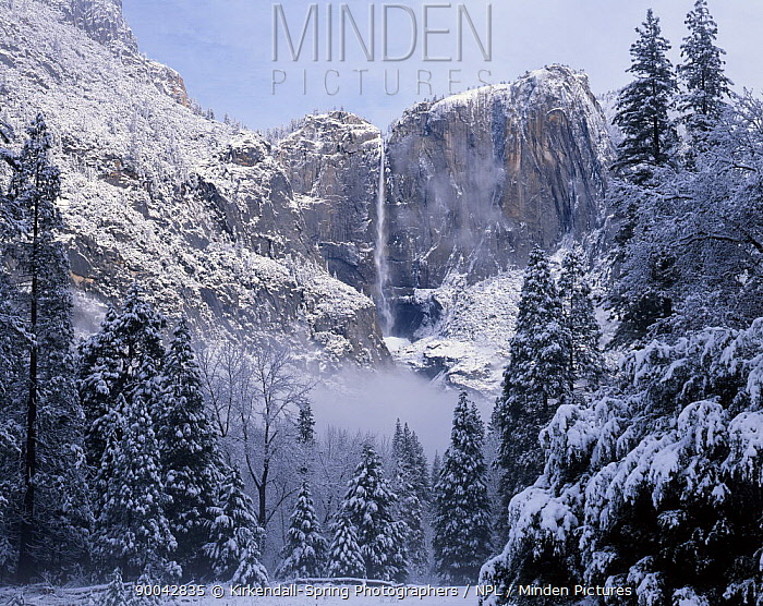Upper Yosemite Falls in Yosemite Valley after winter snow storm, Yosemite National Park, California, USA  -  Kirkendall-spring/ npl