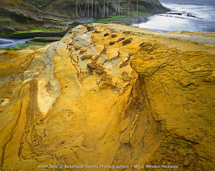 Sandstone ledge at Cape Kiwanda State Park, Oregon, USA  -  Kirkendall-spring/ npl