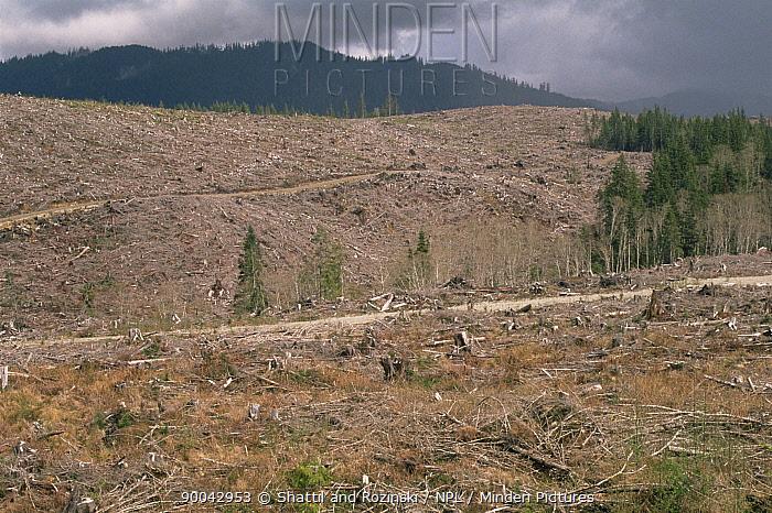 Clearcut temperate rainforest, Washington, USA  -  Shattil & Rozinski/ npl