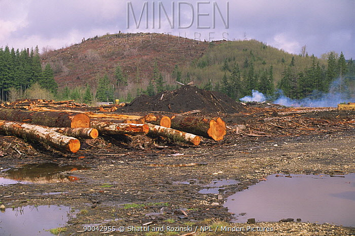 Logs from clearcut temperate rainforest, Washington, USA  -  Shattil & Rozinski/ npl